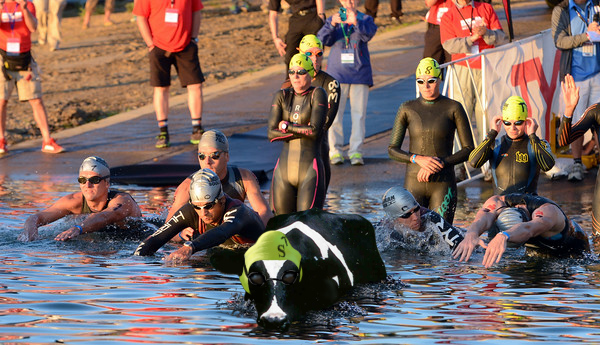 "Shirley, taking an early lead against the Males of our species, swims against the ""Human Tide"" of competition at this year's Ironman Boulder Event."