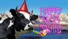 Happy_Moo_Year_Card_Thmb