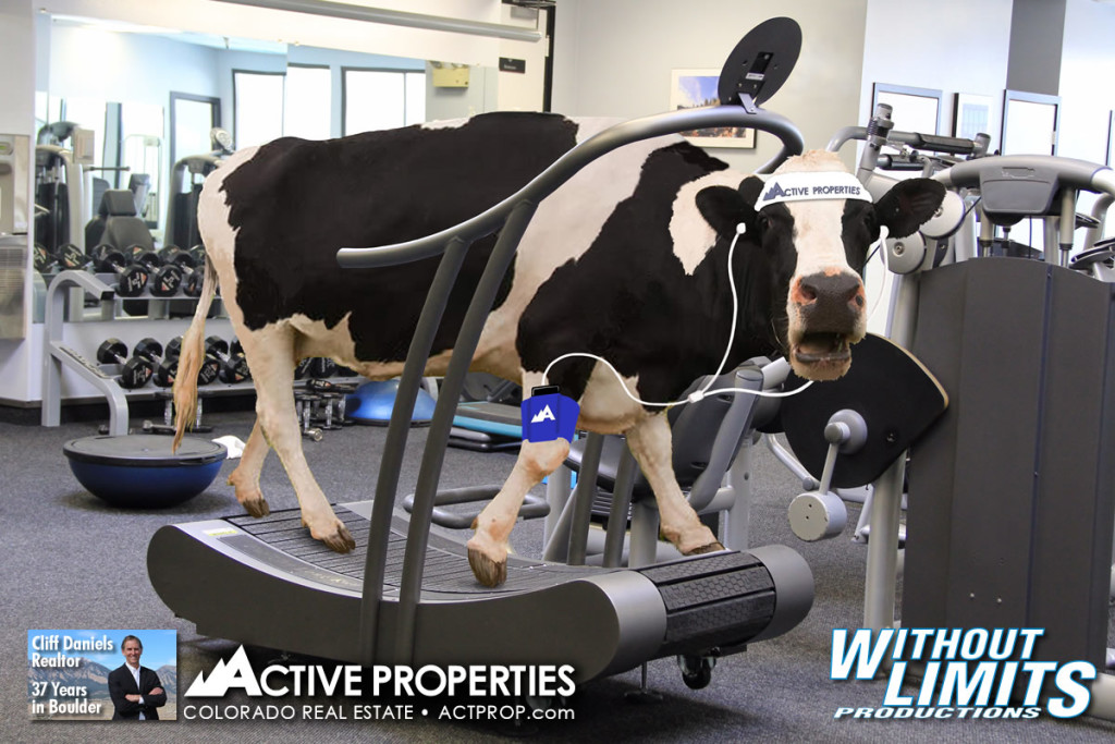 Treadmill - Without Limits