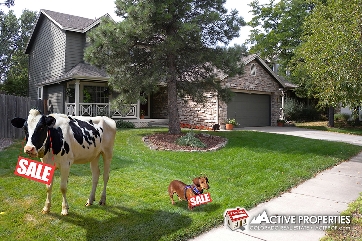 For Sale (Under Contract) 5830 Orchard Creek Lane, Boulder, Colorado
